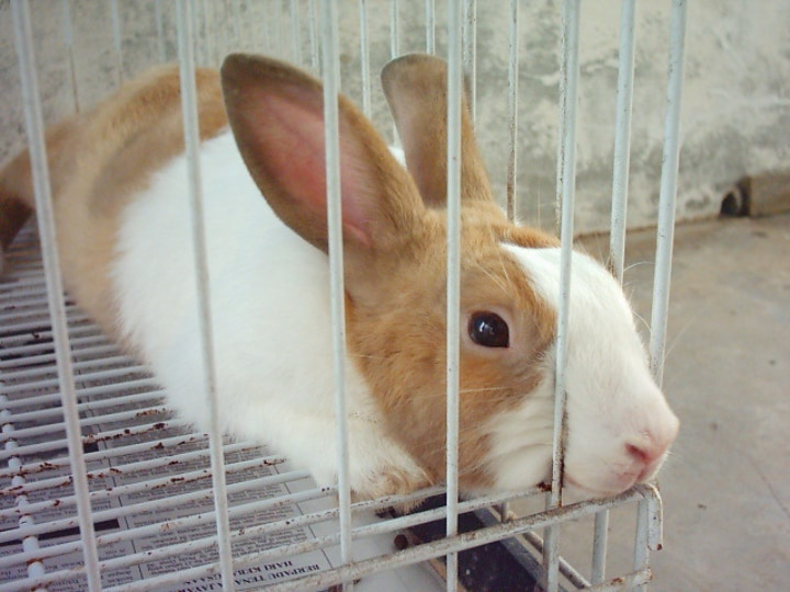metal indoor rabbit cage with a white brown rabbit innside