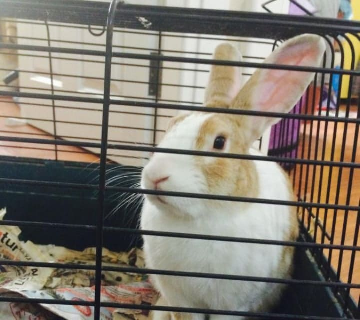 metal rabbit cage indoors