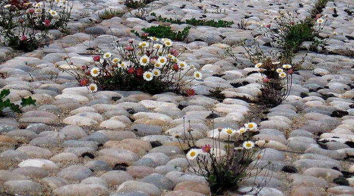 pebble rock garden