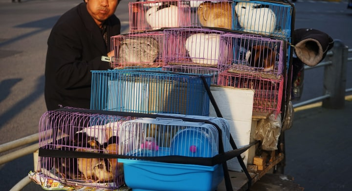 plastic rabbit cages