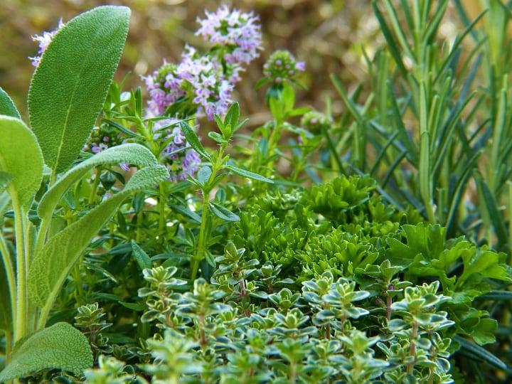 pleasant mini garden