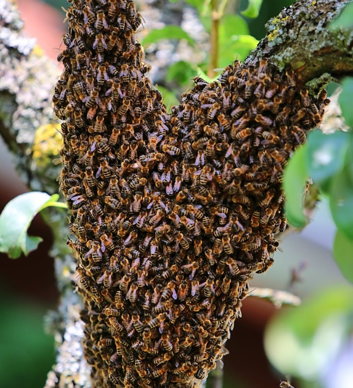 prevent bees from swarming