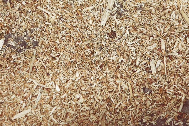 produce mealworms