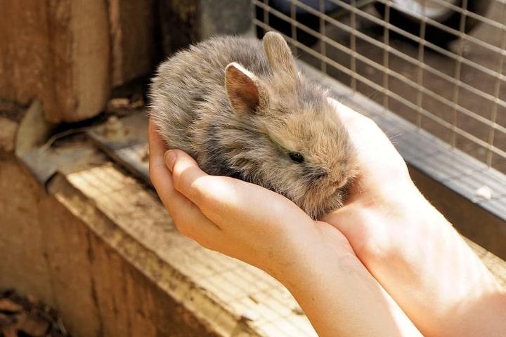 rabbit cage faqs