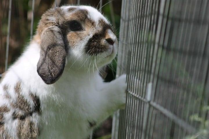 rabbit cage in direct sunlight