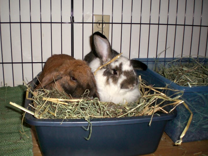 rabbit cage litter boxes