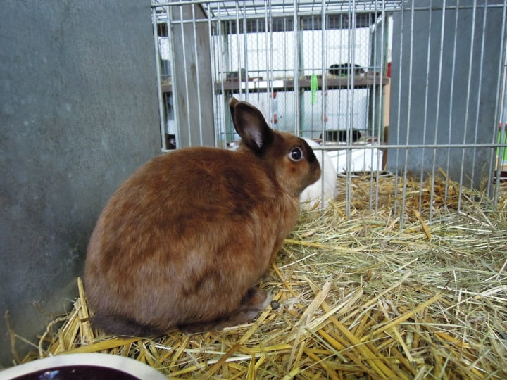 rabbit cage with hay