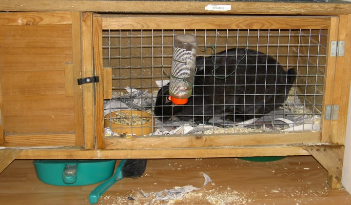 rabbit eating inside a hutch