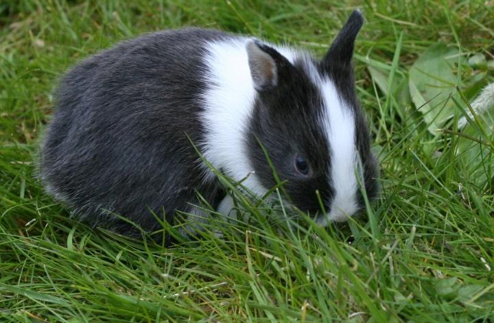 rabbit exploring the garden