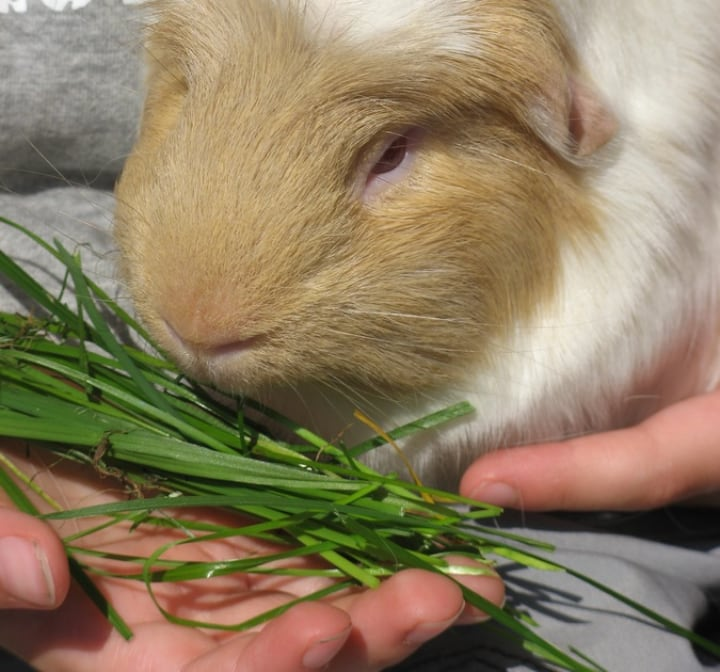 rabbit feeding faq