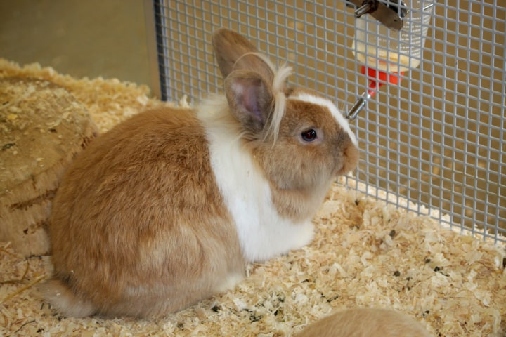 rabbit sipper