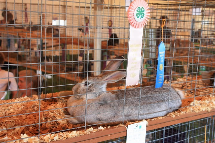 stacked rabbit cages