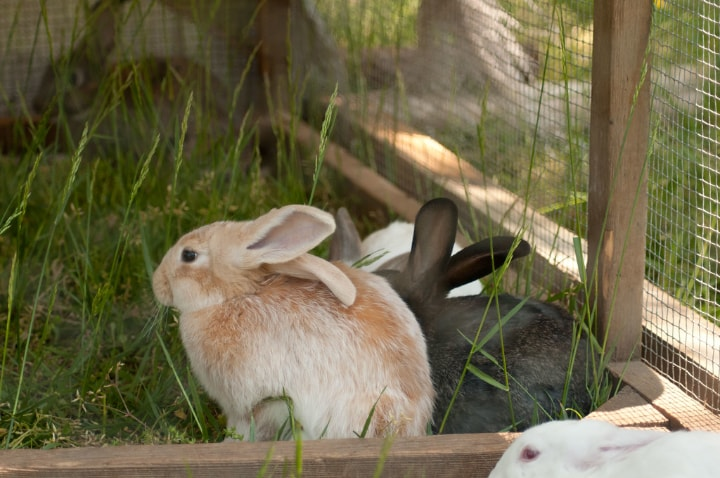 two rabbits inside a rabbit hutch
