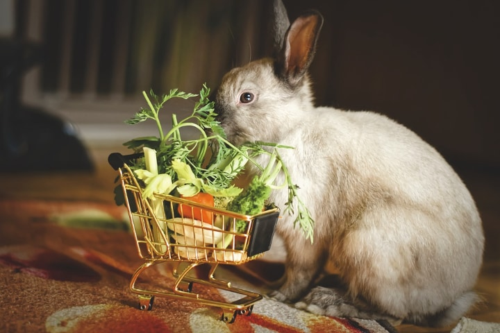vegetable salad for rabbit