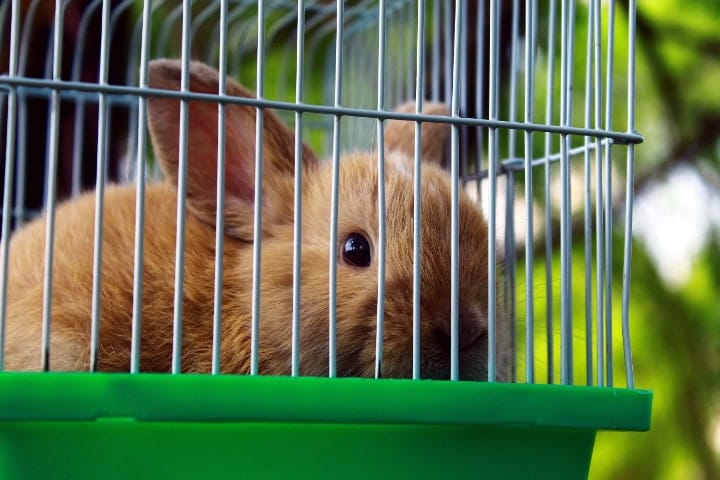 well ventilated rabbit cage location