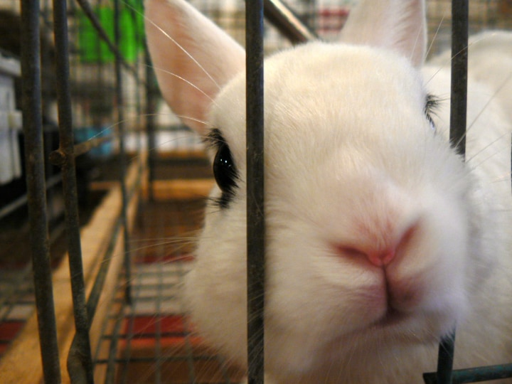 white rabbit in a cage