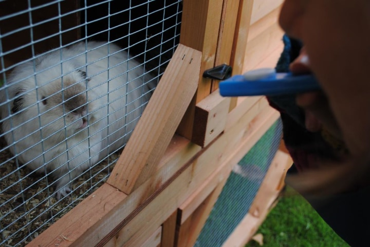 wooden outdoor rabbit cage