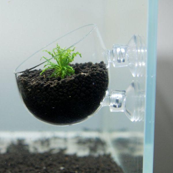aquarium plants plastic