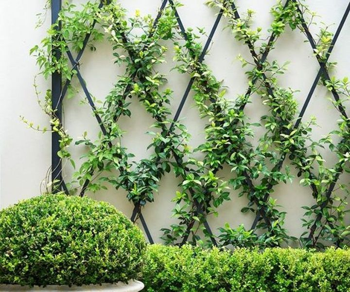 plant wall climbers