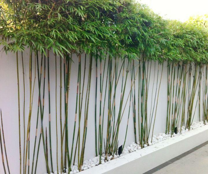 plant wall garden