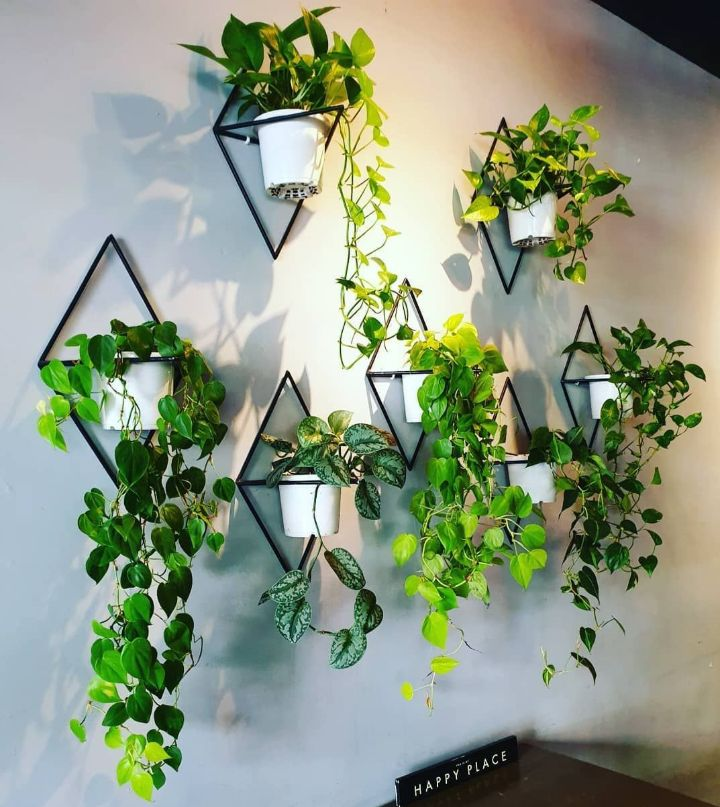 plant wall hanger indoor