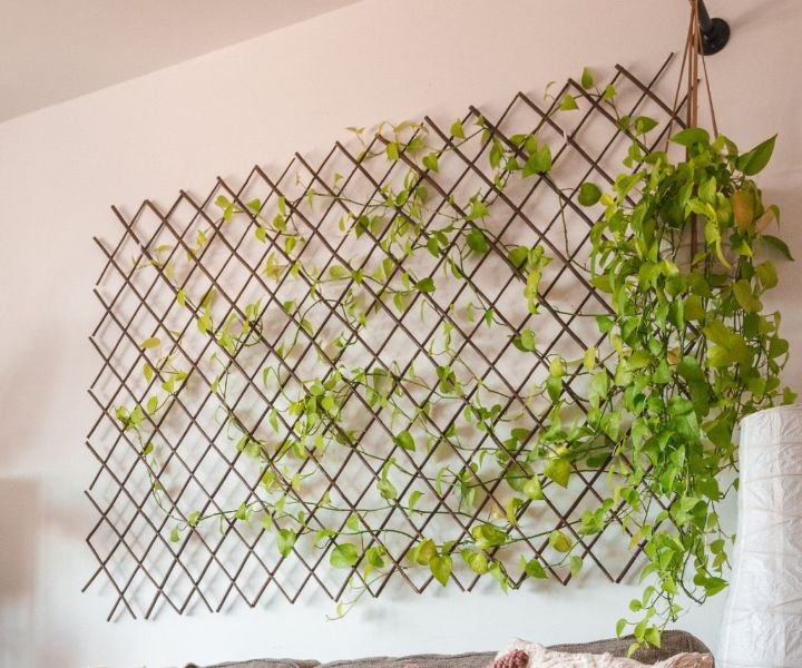 plant wall indoor