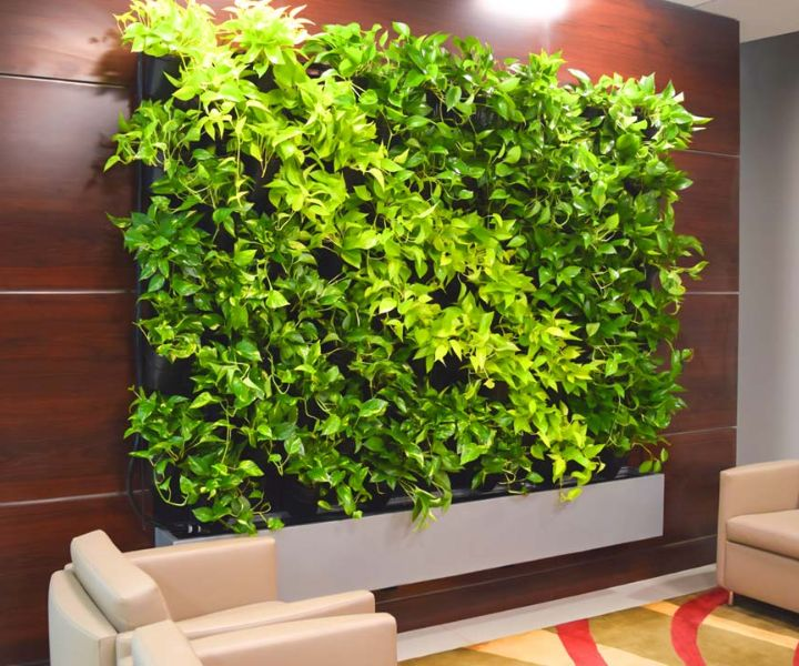 plant wall pictures