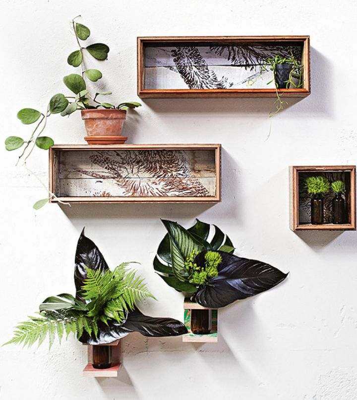 plant wall shelf ideas