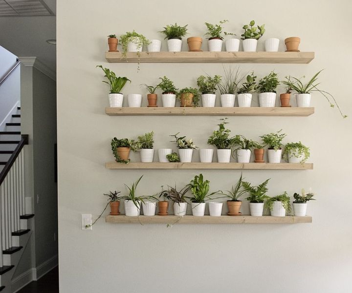 plant wall shelf