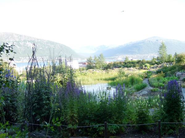 tromoso artic alpine botanic garden