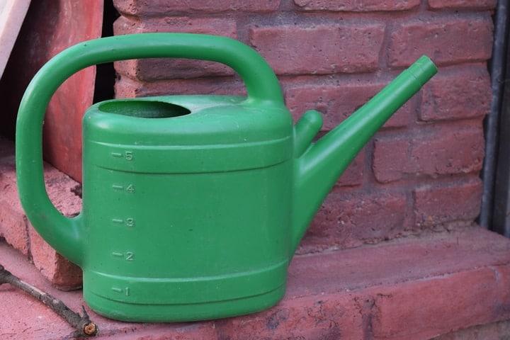 watering hyacinth