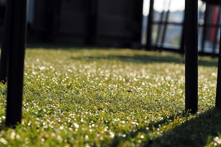 artificial grass on a sunny day
