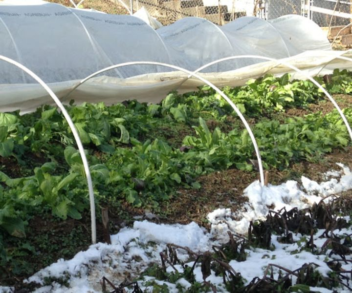 backyard winter gardening