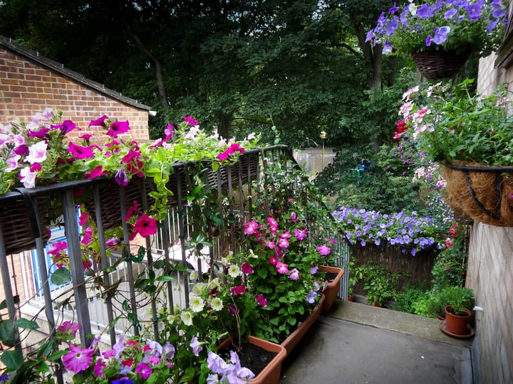 balcony garden filled with flowers