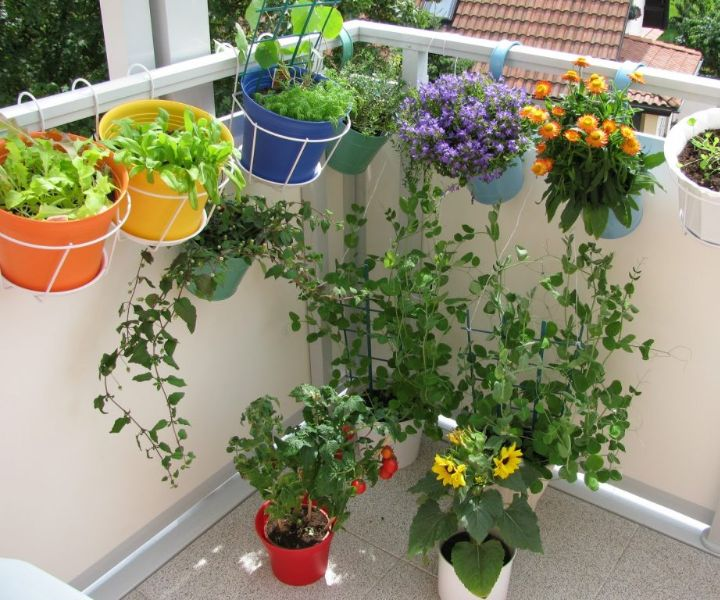 balcony garden for beginners