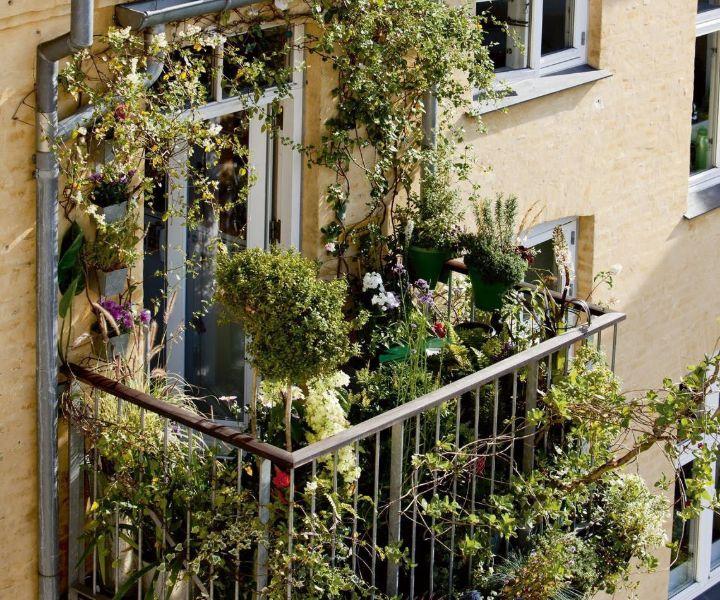 balcony garden pinterest