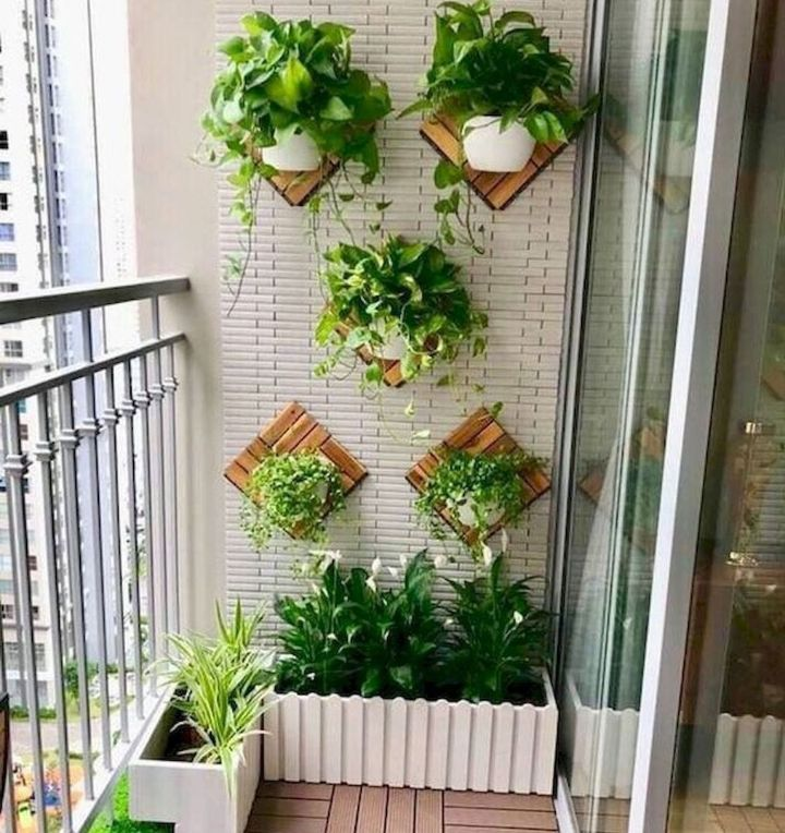 balcony garden plants