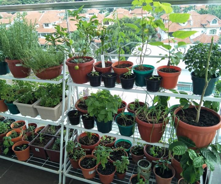 balcony garden starter kit