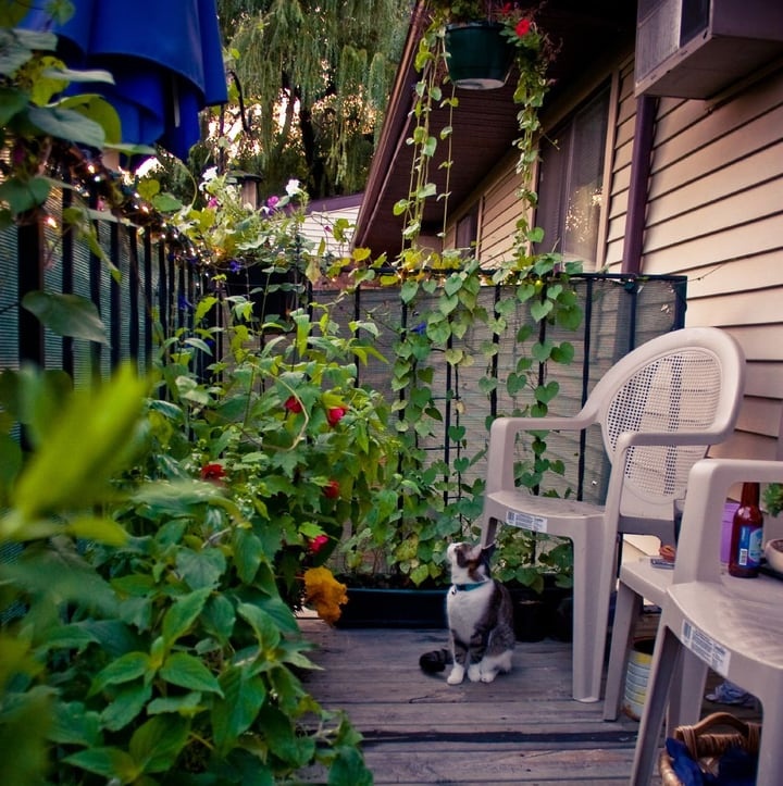 balcony garden with chair