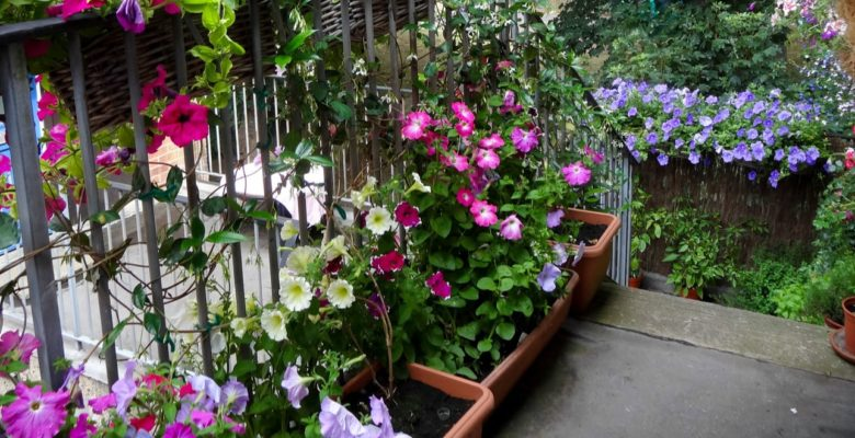 balcony garden with flowers
