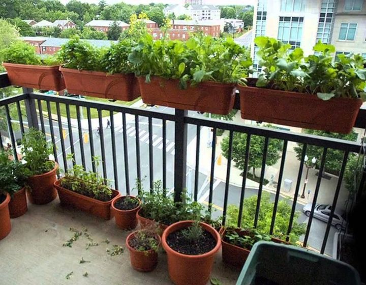 balcony gardening for beginners