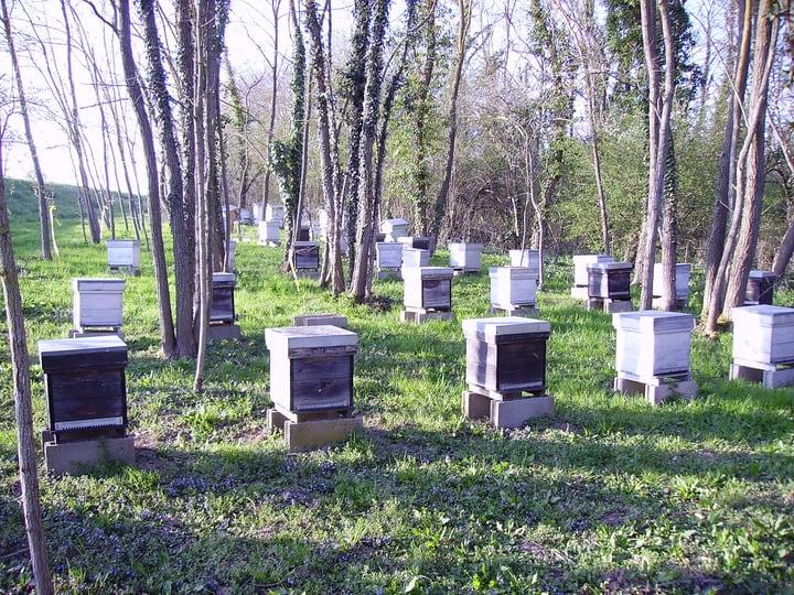 bee farm