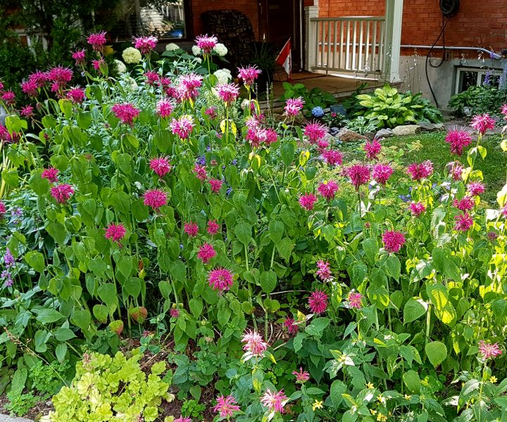 bee garden ontario