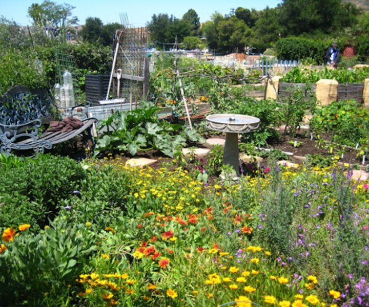 bee garden plans