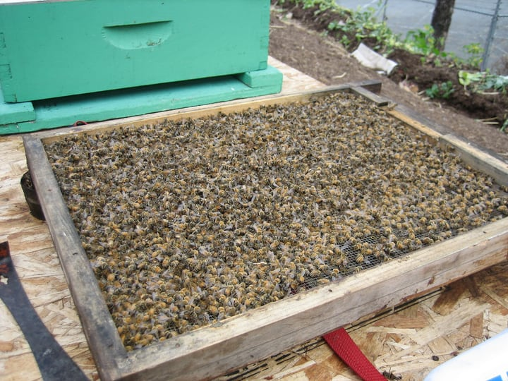 bee hive bottom board