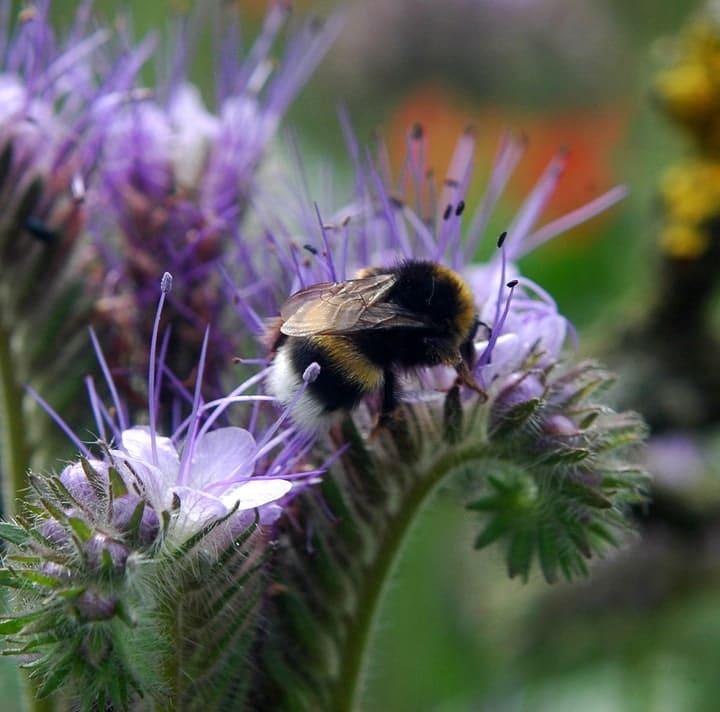 bee loving garden