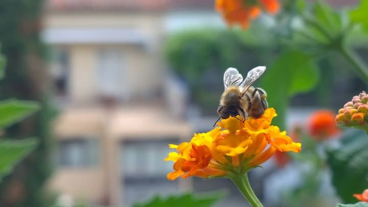 bee on the balcony