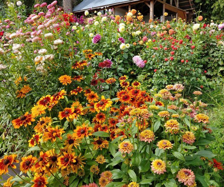 bee pollinators in your garden