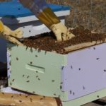 beginner friendly langstroth hive