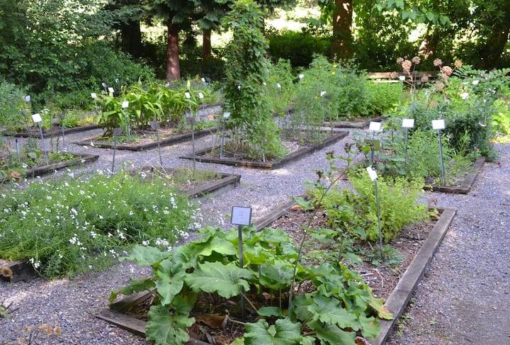 big herb garden
